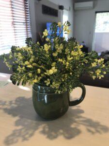 花が咲いたスティックセニョール