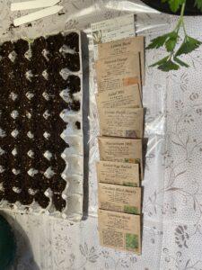 種まき用卵パック(紙製)